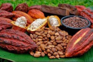 Curiosides del chocolate